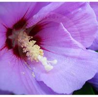 Purple by tigerlily88