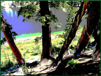 Mammoth Trees by ChaosRuby