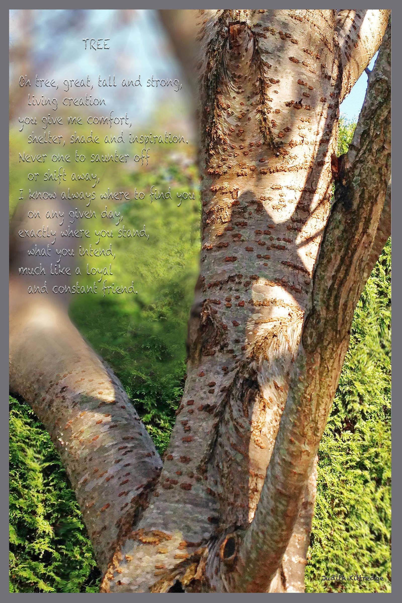 TreeFirstFramed by JKittredge