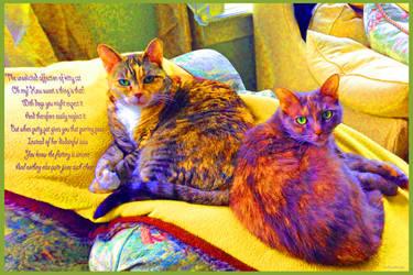KittyCat2 by JKittredge