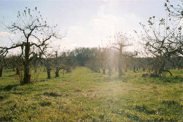 Apple Orchard by MEANINGLESSexistance