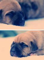 puppy 05 by xbeyotchx