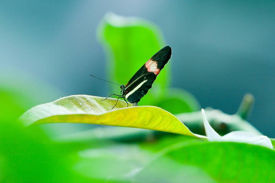 Butterfly by sean335