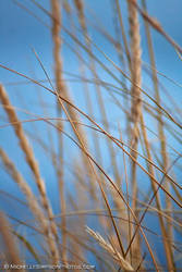 Sea Grass by MSimpsonPhotos