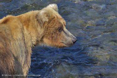 Bear Portrait by MSimpsonPhotos