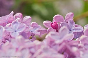 Late Bloomer by MSimpsonPhotos