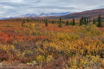 Colors of Denali by MSimpsonPhotos