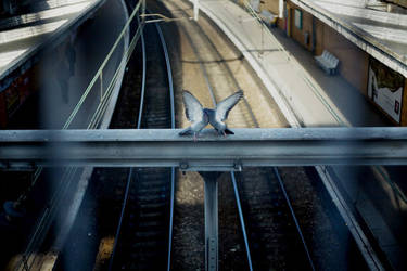 pigeons butterfly. by Gonzale