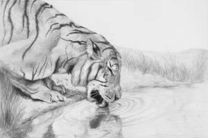 Tiger by kinobuta