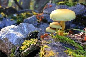 Autumn life by stellazvezdica