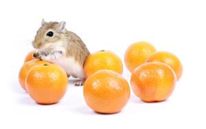 Mandarins by hyouro