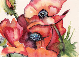 'Breath of 'Poppies' by aladyx