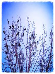 Springtime Sounds by Snowdog367