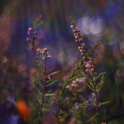 April Heather by Justine1985