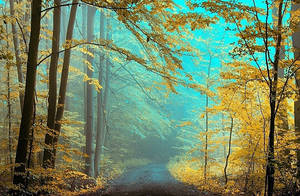 Yellow Forest by Justine1985
