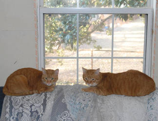 Ginger Twins by slephoto