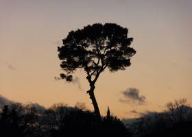Tree in sunset sky by Ankelwar