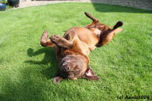 Brown Labrador Part 7 by Annie1004