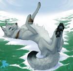 Lobo the Wolf by Shadowwolf