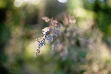Longing by MeadowFay