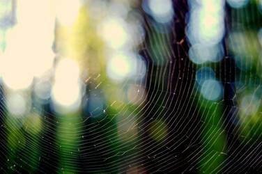 Spider-work by MeadowFay