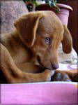 Dog by e2k