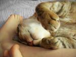 I love my cat by konomu-imouto