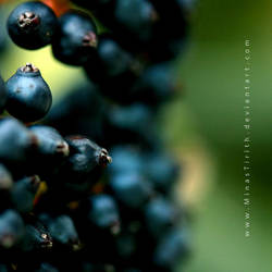 Blueberries by MinasTirith