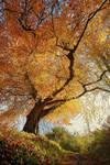 Belvoir Tree from Below R by Gerard1972