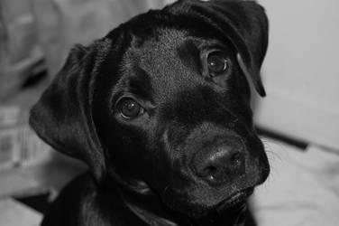 baby dog by bemyxxhero