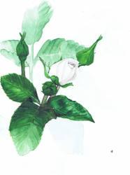 Rose by InStantUsage