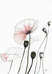 Poppy by InStantUsage