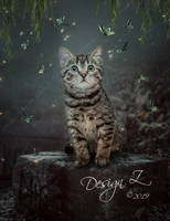 Kitty Cat by sofijas