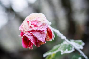 Frozen love by IgorKlajo