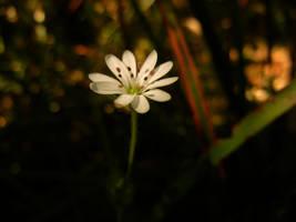 Tiny Flower by MadeleineAlana