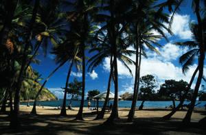 Palm tree beach of Les Saintes by hipe-0