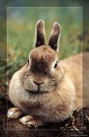 Rabbit by hipe-0