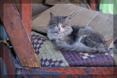 Cat of Marrakech by hipe-0