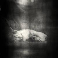Pofu's dream by etchepare