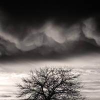 Mon arbre by etchepare