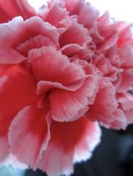 Pink Flower One by Futiafox