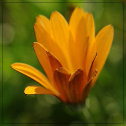 Orange by barcon53