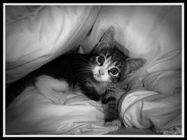 Kitten by SarahBond
