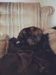 Six taking a nap! by MrTenacious01