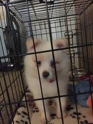 My new puppy :D  by NavitGB