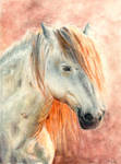 Horse by verda83