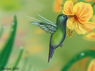 Colibri thalassinu by IDACHI