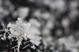 Snowflake III by AKayPhotography