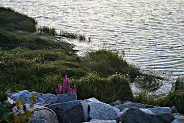 Grasses in water by BreezeStock