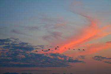 Night sky A by BreezeStock